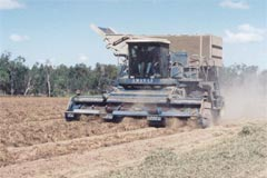 6. When the peanut plants have dried out enough, the peanuts are shaken off the dried bushes with a thresher